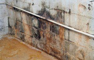 myrtle beach mold inspection and removal